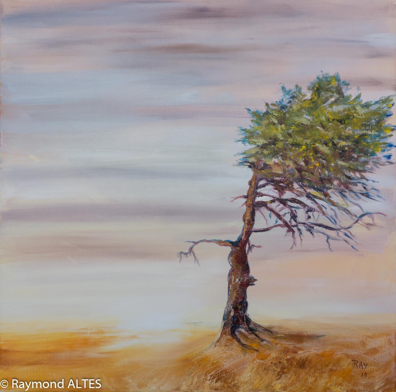 Raymond Altès : Façonné par le vent